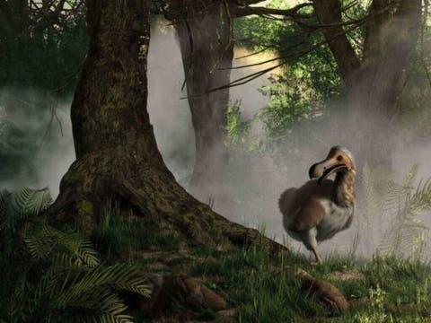 Dodo Kusu Nesli Tukenen Bir Turun Hikayesi Benim Hayvanlarim