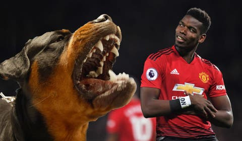 Here S Why Manchester United S Paul Pogba Spent 15k On A Dog
