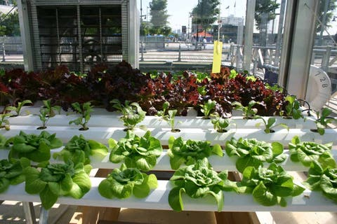 How To Grow Food With Hydroponics