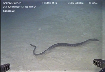 Sea Snakes Can Dive Up To 250 Meters Deep That S 800 Feet