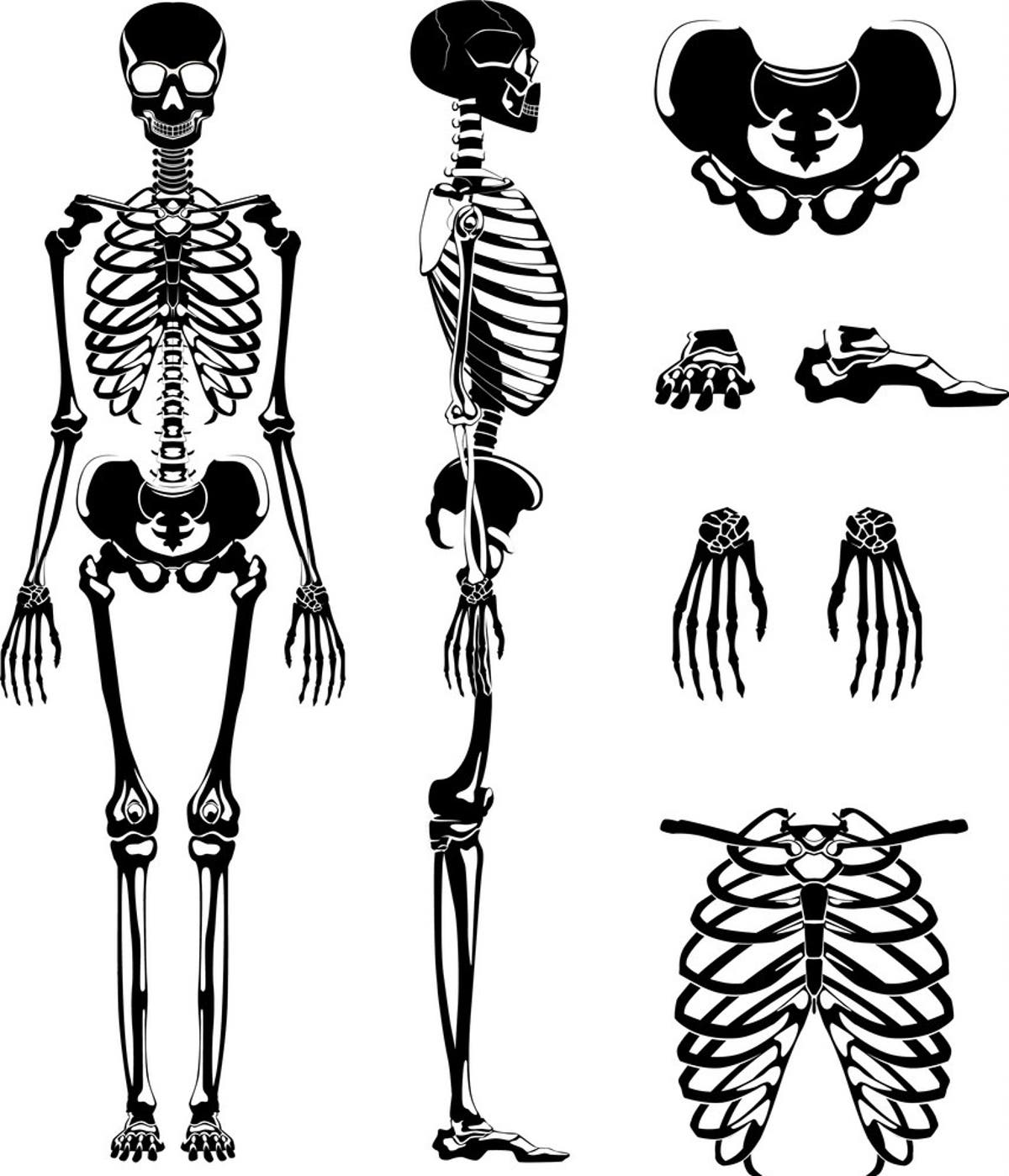 Forensic Anthropology The Identification Of Human Remains To Solve A Crime
