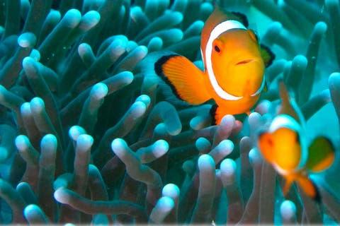 curiosidades sobre los peces