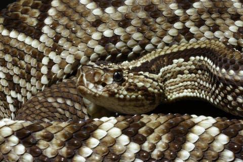 enfermedades comunes en serpientes