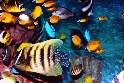 Estos son los problemas más comunes en acuarios de agua caliente