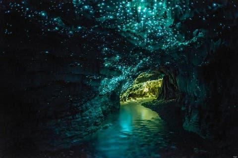 bioluminisciencia