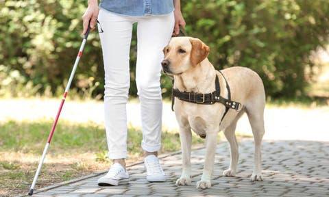 Cómo solicitar un perro guía