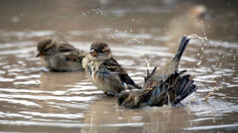 Resultado de imagen de El mundo se está quedando Sin Pájaros