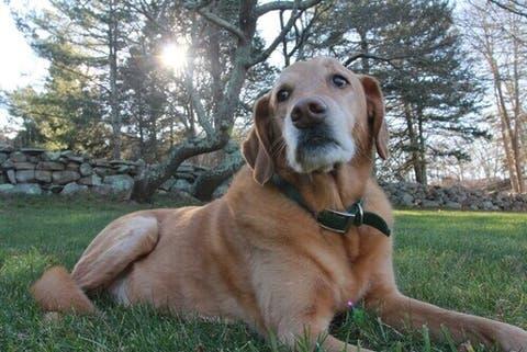 perdita di peso cane anziano
