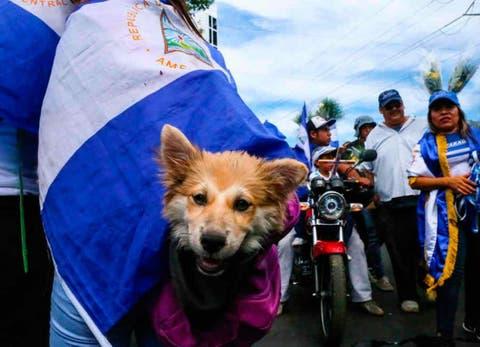 Firulais Un Perro Con Convicciones Combate Documentales Redes Sociales