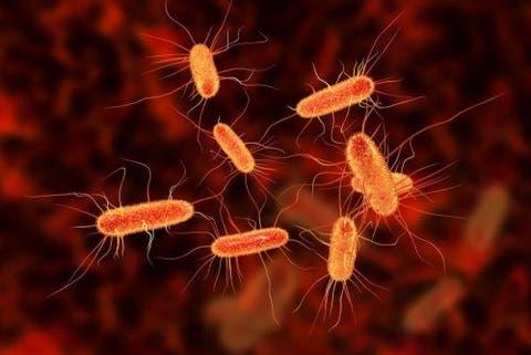 infecção de intestino pode matar