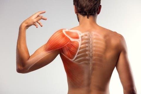 Fazer musculares espasmos o que para