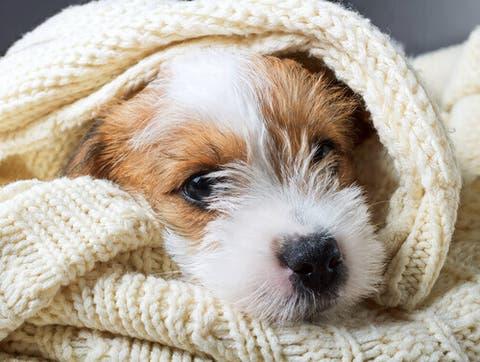 Resultado de imagem para eutanasia animal