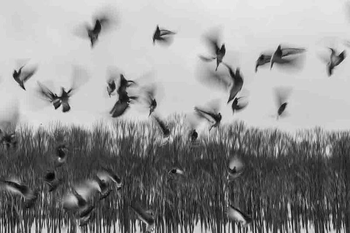 Surprising Mystery behind the Mass Bird Suicide of Jatinga