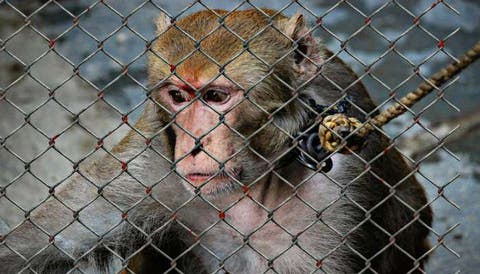 Strict penalties for use of animals for entertainment shows in Oman