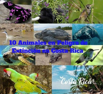 animales en peligro de extinción en Costa Rica