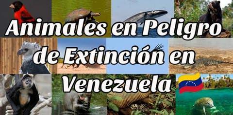animales en peligro de extincion en Venezuela