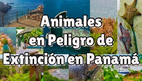animales en peligro de extinción en panamá