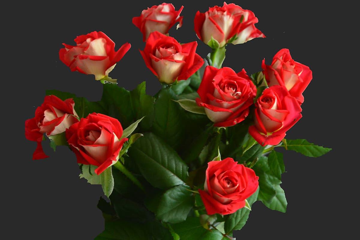 Combien De Rose Pour La St Valentin le prix des roses de la saint-valentin   contrepoints