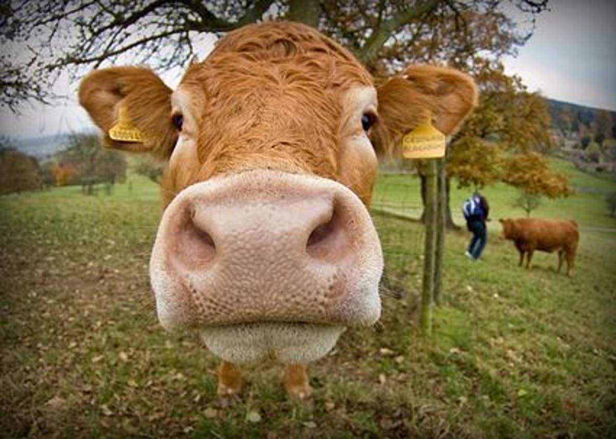 Vegetarianismo_Una_opcion_personal_o_un_principio_de_justicia