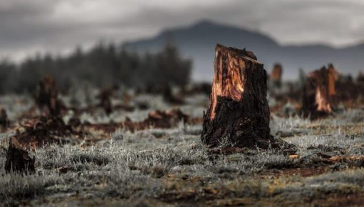 Talar árboles nos está matando lentamente - EcoPortal.net